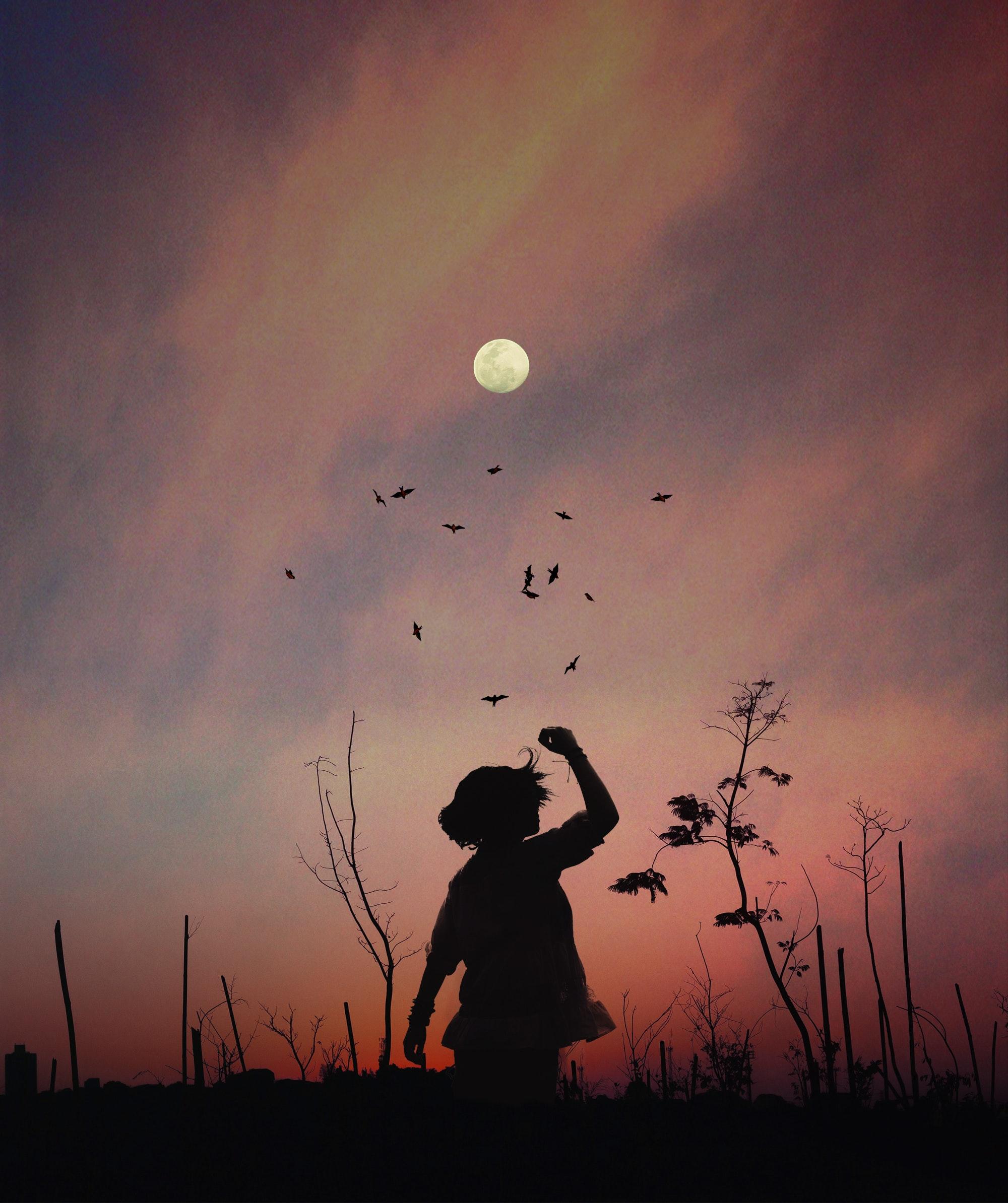 afterglow-art-backlit-birds-556669 - Lorraine Darnell